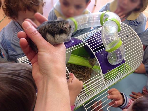 Aprendemos con Coco el hamster